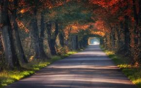 Обои Польша, туннель, аллея, дорога, деревья, осень