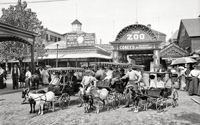 Картинка ретро, США, зоопарк