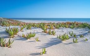 Картинка sea, landscape, Beach, nature, water, sand, shore, plants
