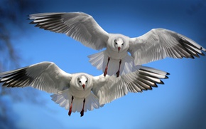 Картинка полет, птицы, крылья