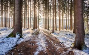 Картинка дорога, лес, снег
