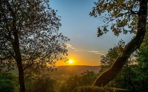 Картинка деревья, закат, вечер