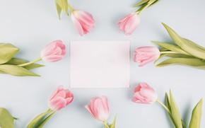 Картинка цветы, рамка, тюльпаны, розовые, fresh, wood, pink, flowers, tulips, spring, tender, frame