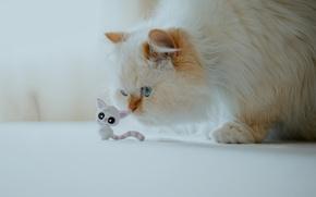 Картинка кошка, пушистая, кошечка, Гималайская кошка