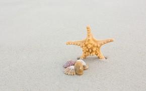 Картинка песок, море, пляж, лето, природа, ракушки, морская звезда