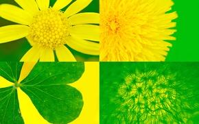 Картинка листья, цветы, коллаж, краски, лепестки