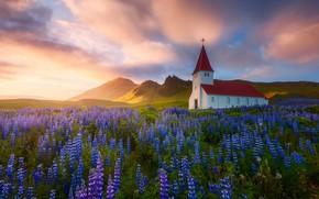 Картинка цветы, природа, Весна, Лето, церковь, храм, Исландия