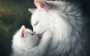 Обои чувства, мама, белый, котенок, малыш, коты, животные, кошка