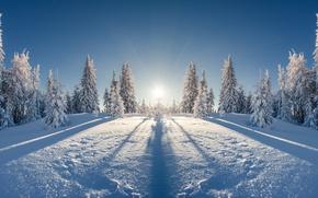 Обои зима, поле, лес, солнце, лучи, снег, пейзаж, отражение, красота, ели, мороз, простор, сугробы, тени, ёлки, ...
