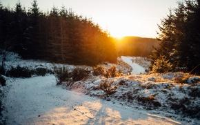 Картинка зима, дорога, солнце, снег, человек, елки, прогулка, гуляет