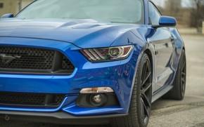 Картинка синий, Ford Mustang, передок