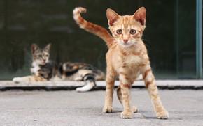 Картинка взгляд, котенок, рыжий