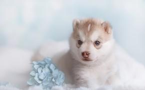 Картинка цветы, фон, собака, боке, фотоссесия