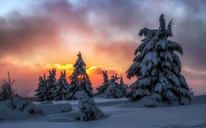 Обои зима, снег, ночь, ёлки
