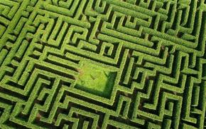 Картинка green, plants, person, Labyrinth