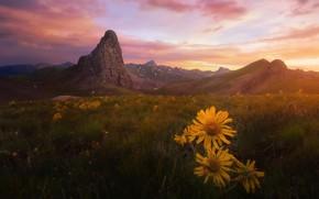 Картинка поле, лето, небо, трава, облака, свет, закат, цветы, горы, настроение, холмы, вершины, даль, вечер, желтые, …
