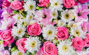 Картинка цветы, розы, герберы