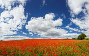 Картинка поле, лето, небо, облака, маки