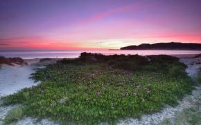 Картинка море, закат, цветы, берег