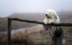 Картинка природа, туман, собака