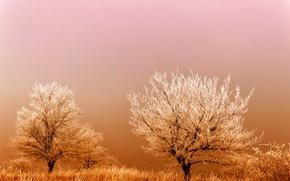 Обои трава, деревья, мороз, иней, поле, восход, туман