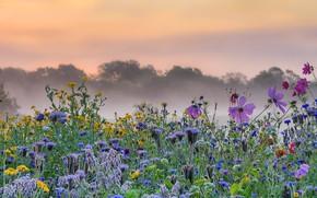 Картинка цветы, туман, утро