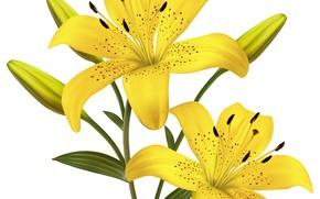Картинка Цветы, Желтые, Фон, Лилии