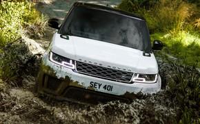 Картинка лес, растительность, лужа, грязь, внедорожник, Land Rover, чёрно-белый, Range Rover Sport P400e Plug-in Hybrid