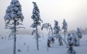 Картинка зима, снег, туман