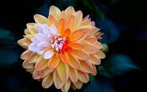 Картинка цветок, лепестки, бутон
