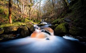 Картинка лес, природа, река, ручей, камни
