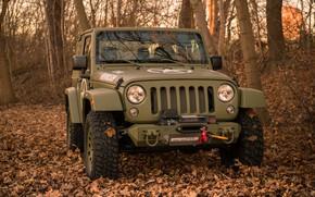 Обои Geiger-Willys Limited Edition, Jeep, деревья, бампер, лебёдка, листва, 4x4, мягкий верх, осень, лес