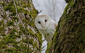 Картинка дерево, птица, сова