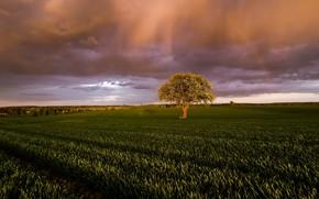 Картинка поле, свет, тучи, природа, дерево, утро