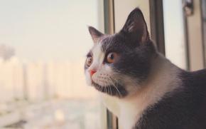 Картинка кошка, взгляд, окно, мордочка
