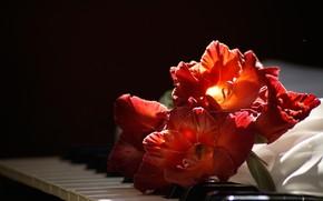 Картинка крупный план, клавиши, красные, черный фон, пианино, боке, гладиолусы