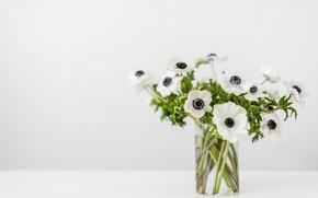 Картинка белый, цветы, фон, мак, букет, ваза, боке