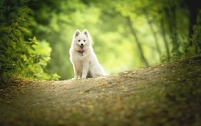 Картинка природа, собака, щенок, боке
