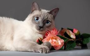 Обои кот, Анна Верзина, Anna Verzina, розы, взгляд, цветы, животное, кошка