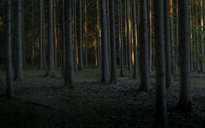 Картинка лес, деревья, сумерки