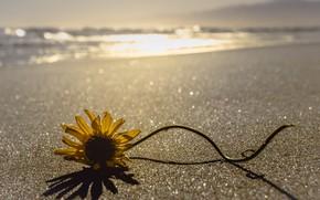 Картинка море, цветок, берег