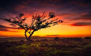 Картинка небо, пейзаж, дерево, красота