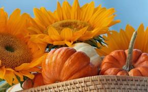 Картинка осень, подсолнух, урожай, тыквы