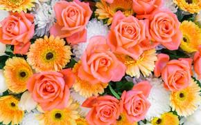 Картинка розы, герберы, хризантемы, астры, желтые цветы, цветочный фон