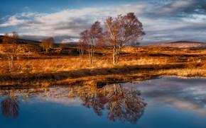 Обои деревья, ветер, Шотландия, Rannoch Moor, Раннох-Мур