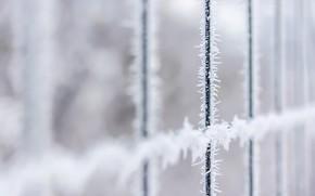Обои зима, иней, забор