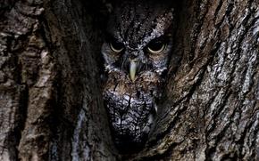 Обои сова, птица, кора, дерево