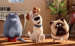 Картинка Dog, Cat, View, Max, Room, Cartoon, Chloe, Animals, Mel, The Secret Life of Pets