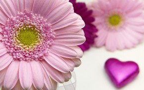 Картинка цветок, макро, лепестки, Сердечко, Гербера