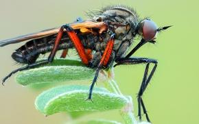 Картинка макро, крупный план, зеленый, фон, растение, лапки, насекомое, комар, листочки, детали, кровопийца